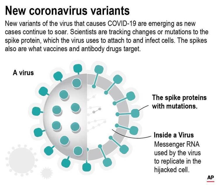 ASSOCIATED PRESS                                 Diagram of the COVID-19 virus